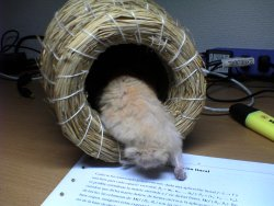 Baru examines his new nest