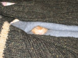 Flan sleeping on a scarf