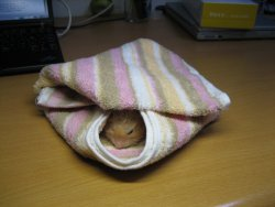 Flan wrapped in a towel