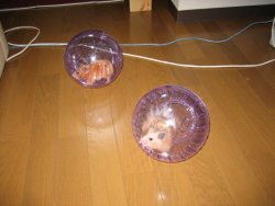 Flan and Nana playing in their balls