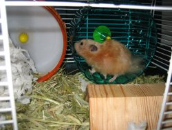 Flan doing exercise on her second wheel
