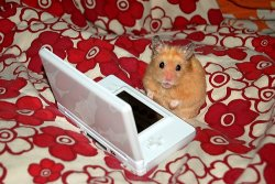 Kumanoko likes his Nintendo DS