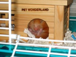 Nana sleeps inside her wooden house